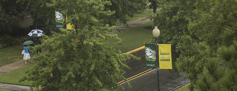 photo of green trees on campus on a rainy day